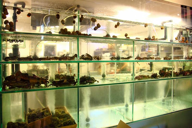 Live-Seafood-Tanks
