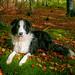 autumn dog by old_b1oke
