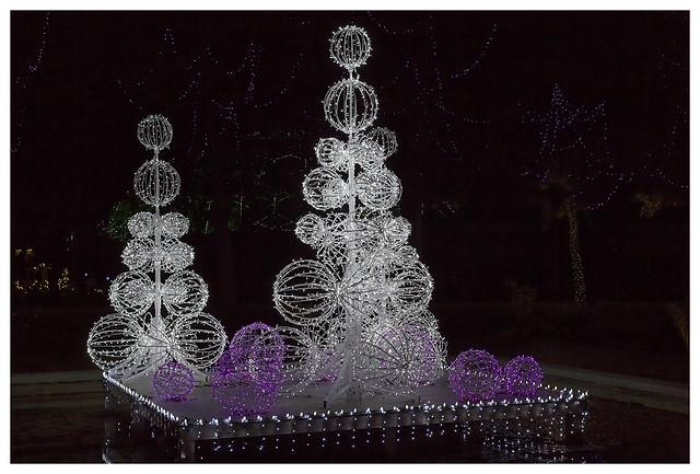 Garden Glow at MoBot 2015-11-20 3