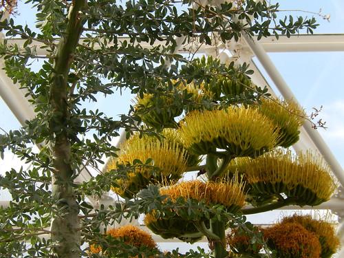 Biosphere 2 - desert