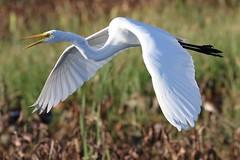 Sweetwater Wetlands Park Gainesville Florida