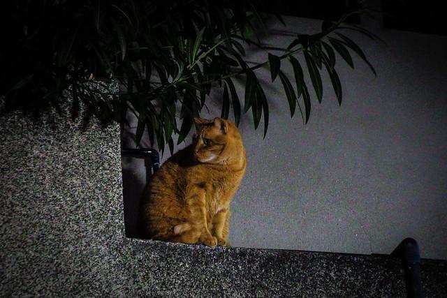 Today's Cat@2015-12-22