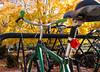 Fall n bikes1_MG_1421