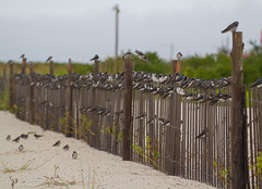 Fence Sitters