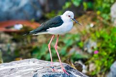 Parc des oiseaux Villars-les-Dombes 2016