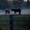 Encore les chevaux...!!!