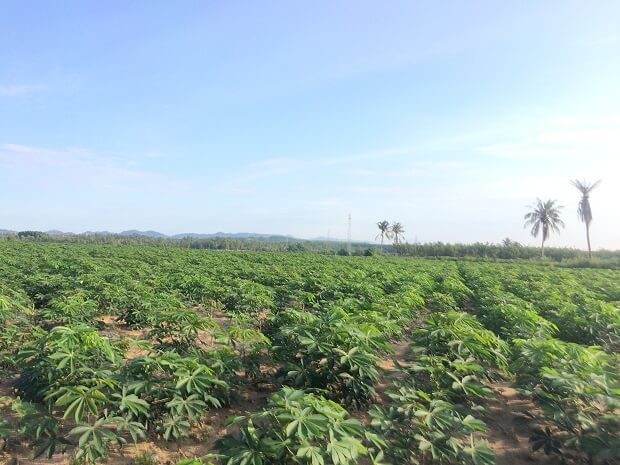 161025 Rayong近くの景色