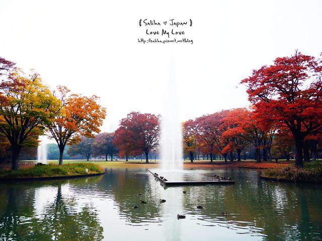 日本東京景點澀谷區代代木公園賞楓葉 (22)