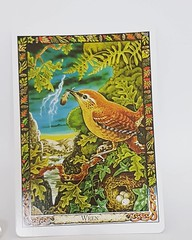Daily messages from #thedruidanimaloracle #thedruidanimaloracledeck #thedruidcrafttarot #wren druien allows us to glimpse the beauty of gods / goddesses in all things. he tells us that small is beautiful and that self realisation lies not in gradually or