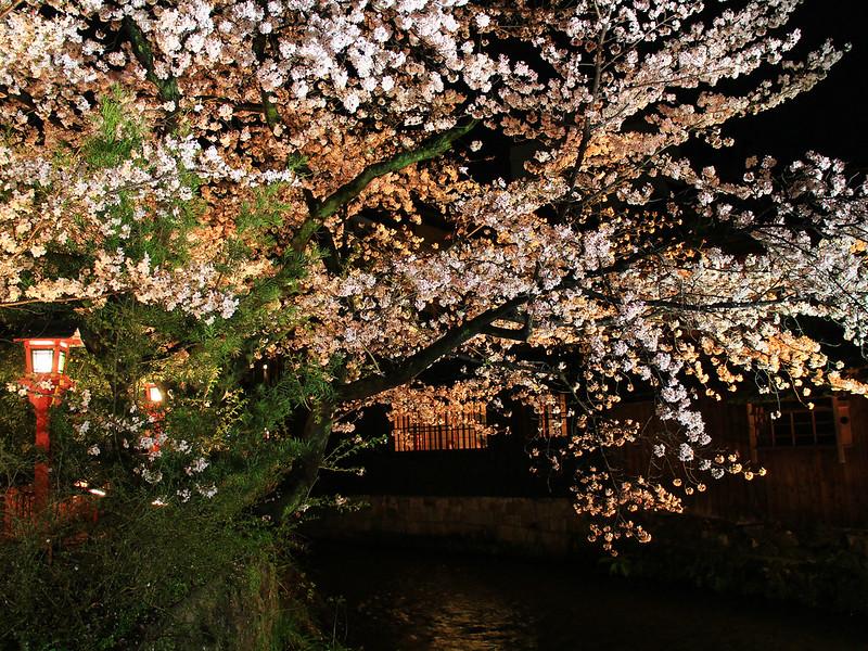 0403_祇園白川夜櫻 (43)