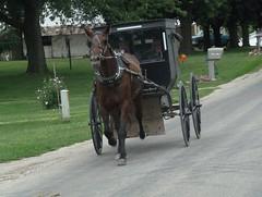 Amish Country 阿米什农庄