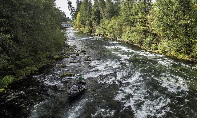 upper mckenzie river fly fishing
