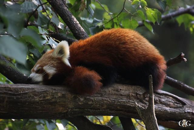 Sonntags-Besuch im Tierpark Friedrichsfelde 04.10.201535