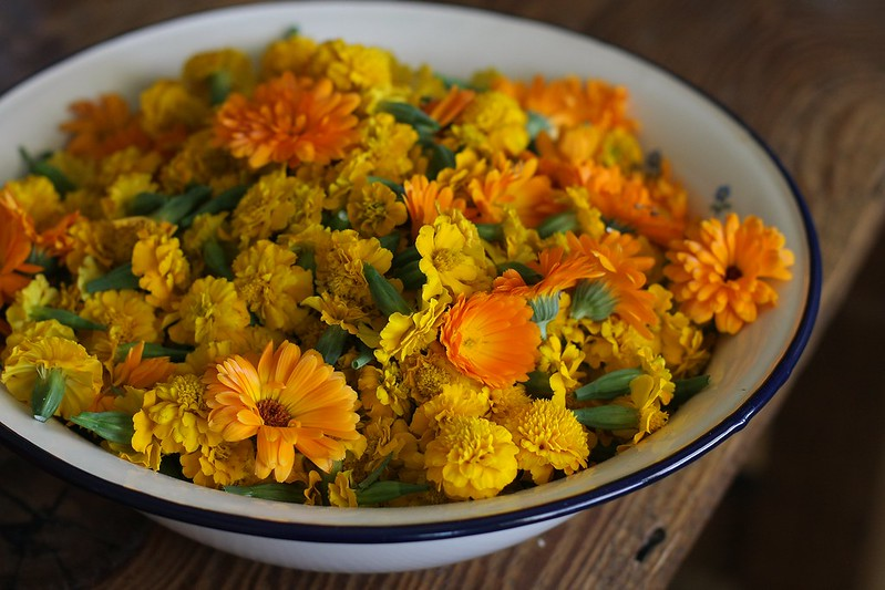 calendula and marigolds for dyeing