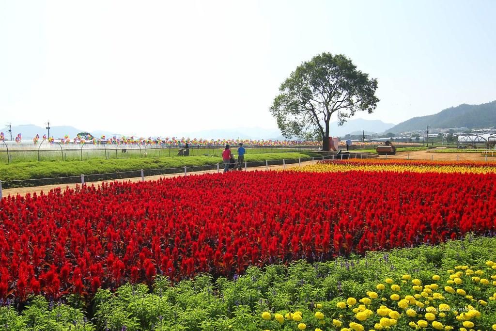 新社花海 (4)