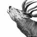 Red Deer Roar by Old-Man-George