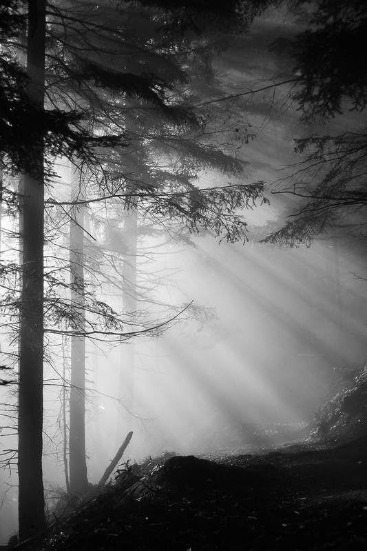 Merveilleuse rando dans les Vosges 22382472287_5f740f4964_c
