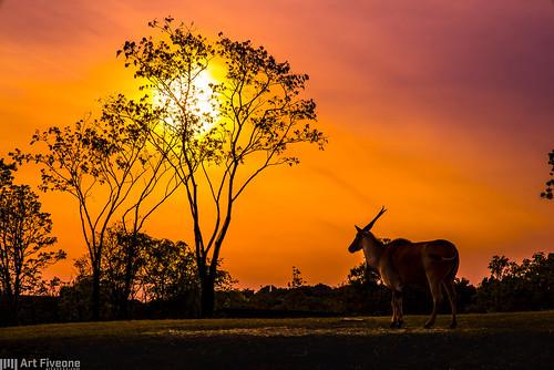 animal zoo 夕陽 横浜 動物 ズーラシア