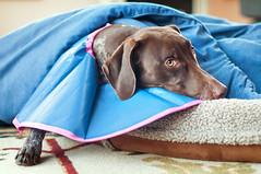 053 Piper in her cone