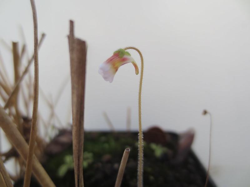 Plantas.werds.2012-2013 - Página 8 23083569590_d5dee02d07_c