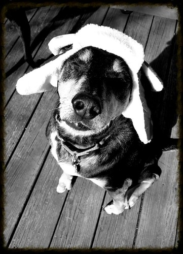 Dog in a Trapper Hat by Lapdog Creations
