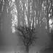 Deer in the mist by toasti123