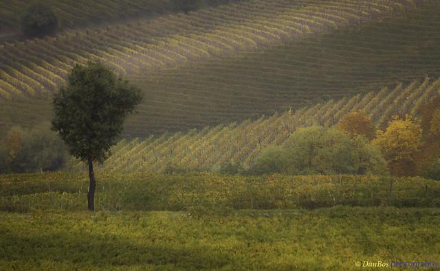 Langhe - Piedmont (Italy): Autumn Colors