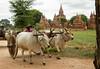 A cloudy day in Bagan, Myanmar (Burma)