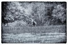 Deer of Margam Park