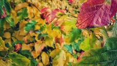 Autumn Panoply