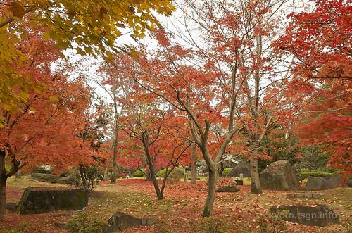 【写真】2014 紅葉 : 智積院/2020-09-07/IMGP7566