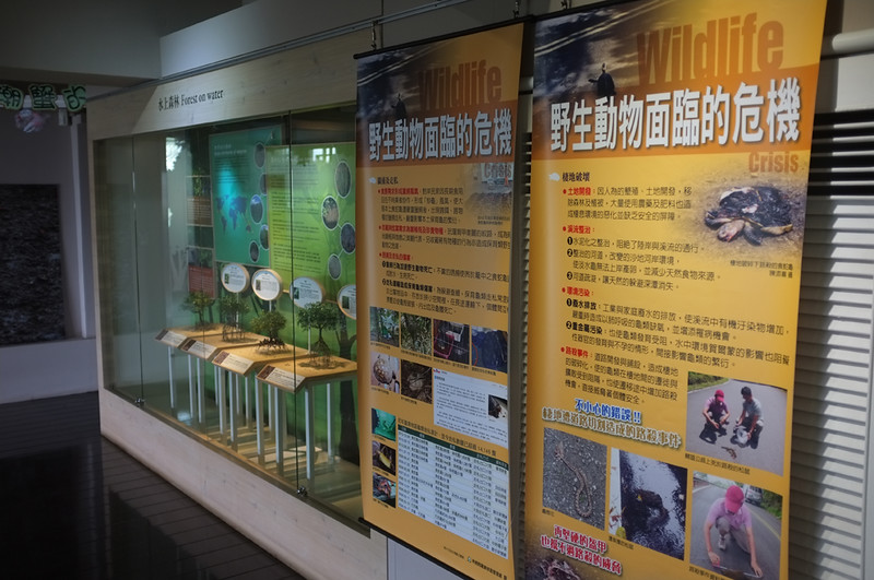 紅樹林生態展示館DSCF6051