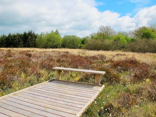Bench on the bog
