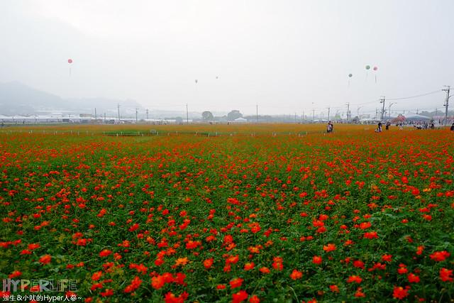 2015台中新社花海65