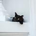 แมวมอง by rescuedigital