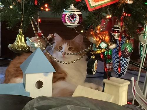 Winston loves Christmas