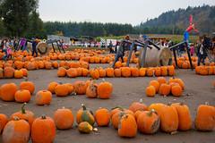 Spooner Farms U-Pick Pumpkins