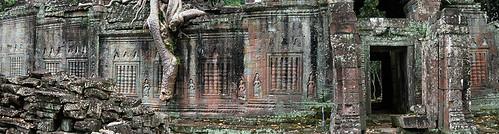 Tree roots enveloping a temple at Angkor Wat, Cambodia