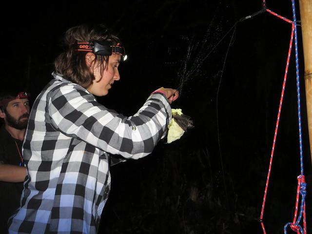 Melissa & Cormack mist netting bats, Archbold Research Centre
