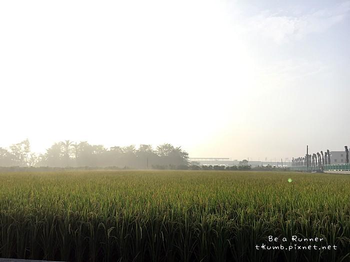 2015田中馬拉松2015-11-08 07.18.46.JPG