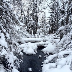 This is a winter sight you don't see often: the creek along Beaver Dam trail still flowing, but surrounded by mounds of beautiful white snow.  Photo by Jane Kolarich. #onlyinmn #gunflinttrail #centralgunflintskitrails #bearskinlodge