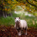 'Hoggit in the Copse' by Jonathan Casey