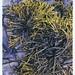 seaweed 1 by gneissgirl