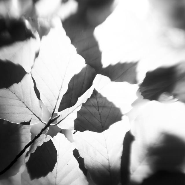 Nether Wood 92 - Beech Leaves