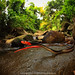 jungle love.. by Rob Valentic - Gondwana Reptile Productions
