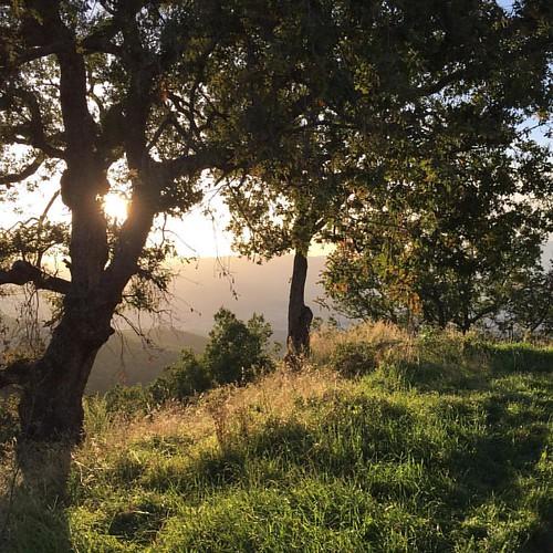 #lamdscape #landscapephotography #fotoautunnali #natura #ambiente #fotografia #paesaggio