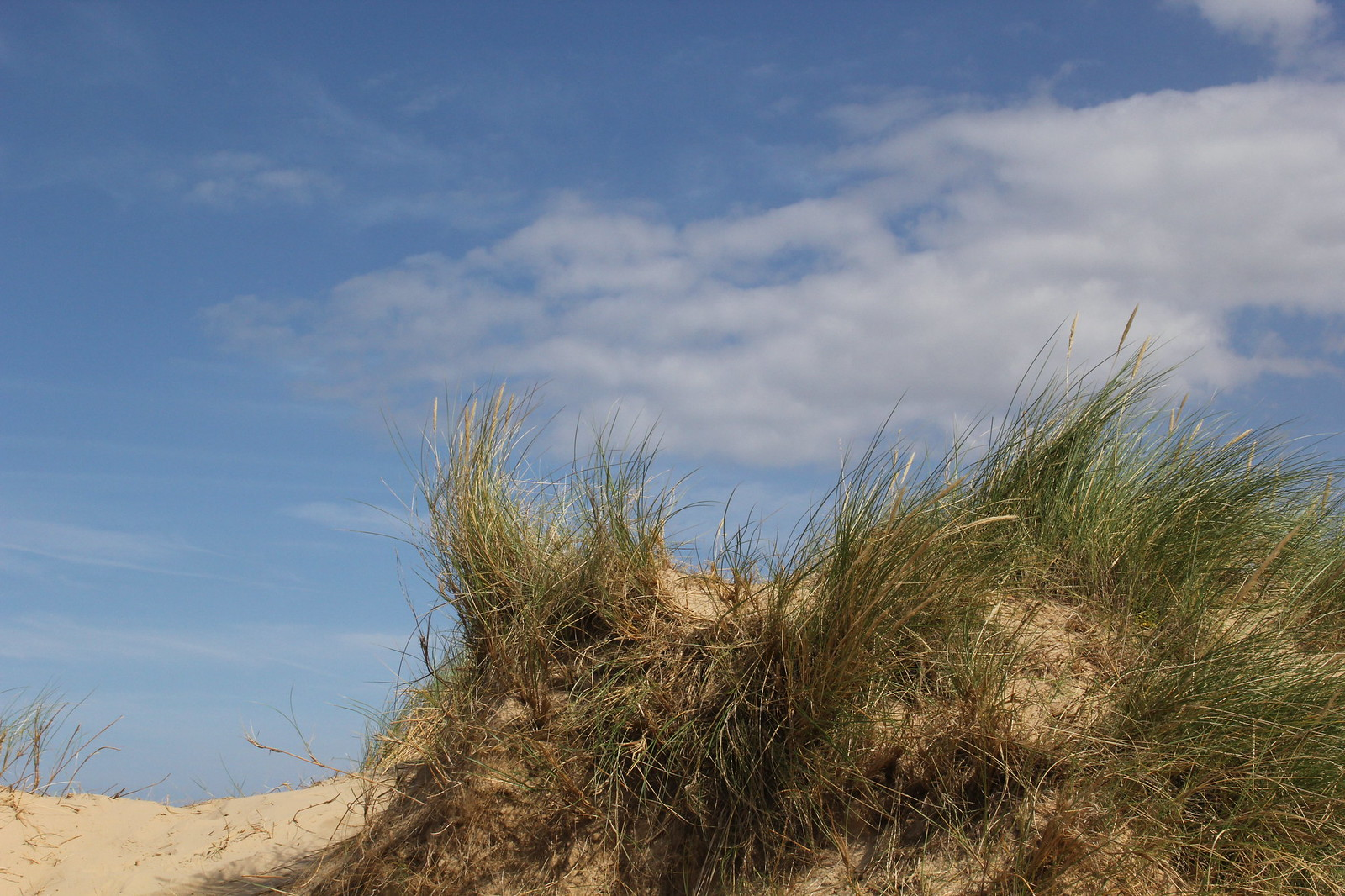 Holkham Beach dunes