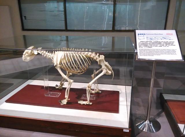 黑熊全身骨骼