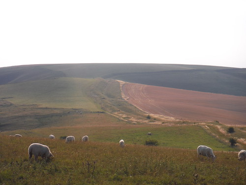 The Wansdyke stretching away to the West