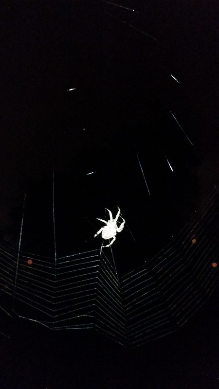 Spider At Night - 20150912_223447
